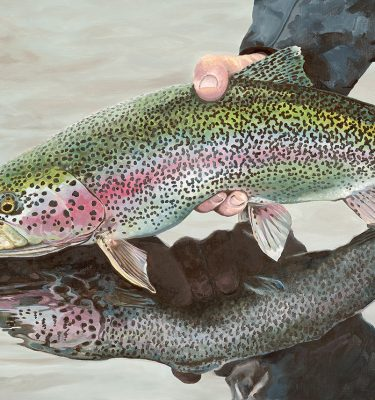 Rainbow Trout Cards