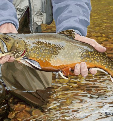 One Last Look - Brook Trout