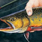 Catch and Release Brook Trout