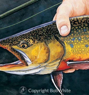 Catch and Release - Brook Trout