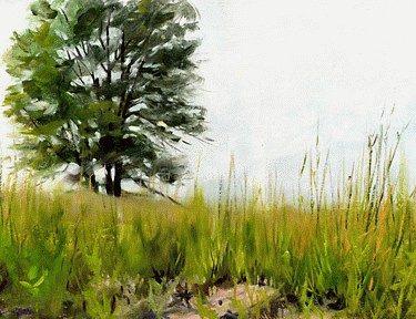 Moss Savanna Prairie Original
