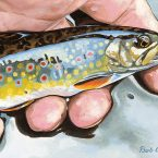 Small Fry Brook Trout