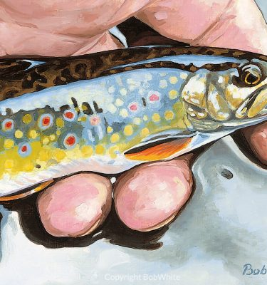 Small Fry - Brook Trout